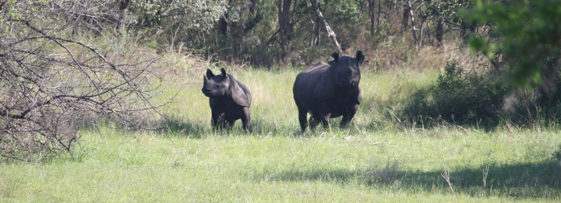 BLACK_RHINO_Gogo_and_calf_crop_jpg