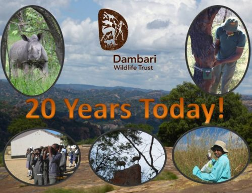 Dambari turns 20!